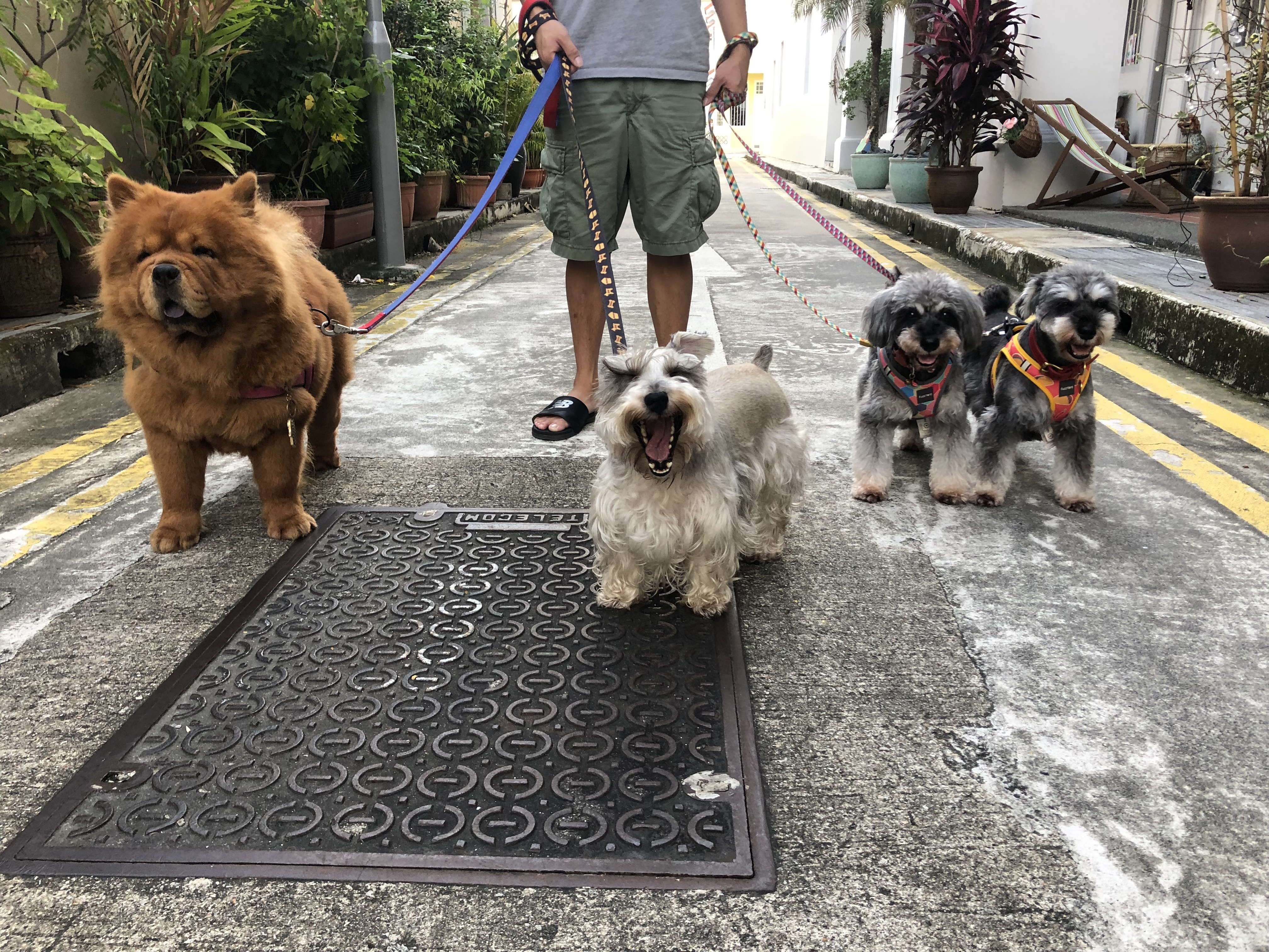 nord_pet_daycare_sg_02